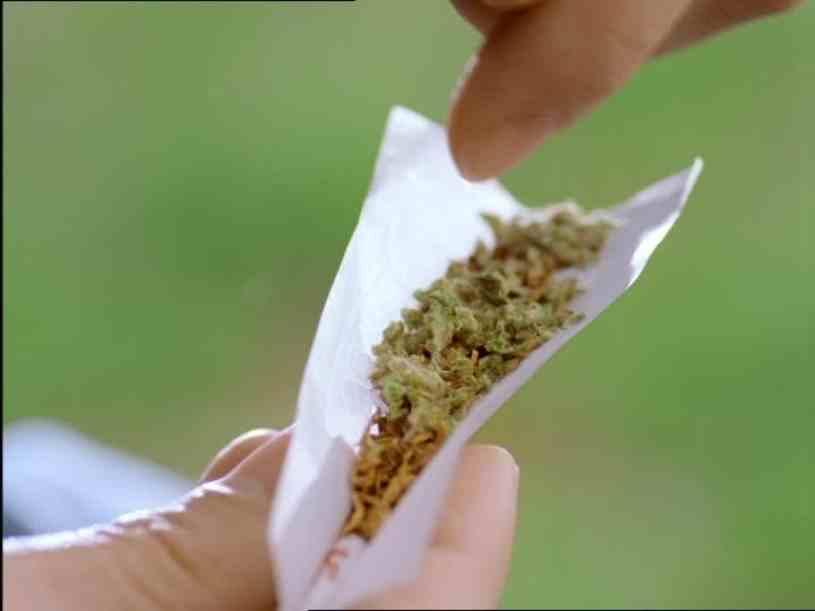 Verdades sobre el cannabis